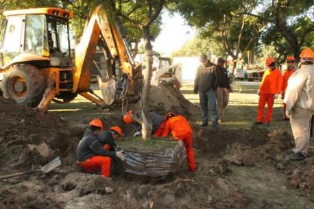 Operativo de preservación de Arboles en Parque Alberdi